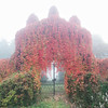 Garden of Eden - On an early morning on my way to an abandoned villa this amazing garden gate emerged from the mist.